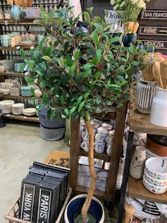 Topiary Style Single Trunk Olive